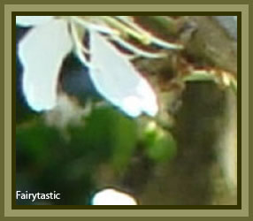Forum for fairy photos