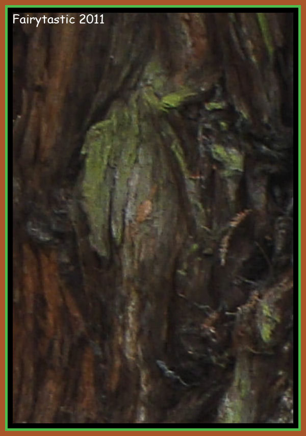 Tree spirits, the Green Man