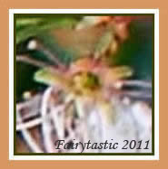 Flower fairy photos, real fairies in flowers