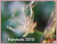 Fairy Photos