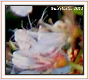 Fairy gatherings, fairy rings, photos