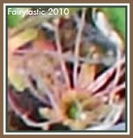 Fairies in flower photos